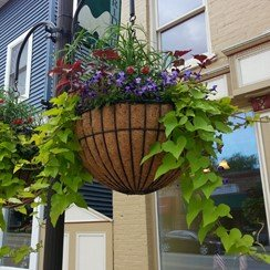 A hanging wire basket lined coir with Via Kinsman Company