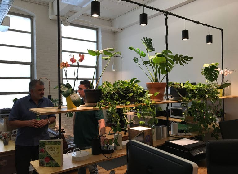 Grow Lights in office over Monstera