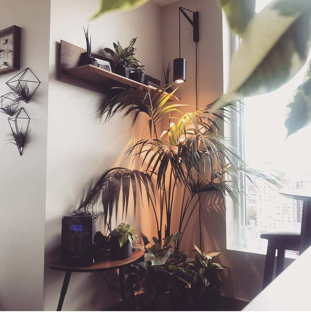 Large Black Aspect™ Plant Light with Pinocchio growing Palm