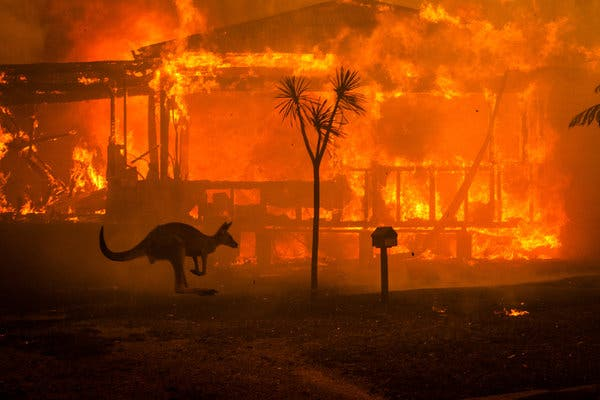 A kangaroo rushes past a burning house in Lake Conjola Australia on Dec. 31. Credit Matthew Abbott The New York Times via Redux Pictures