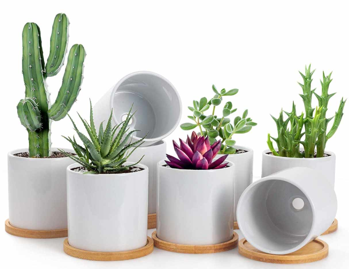 Succulent Planters with Tray