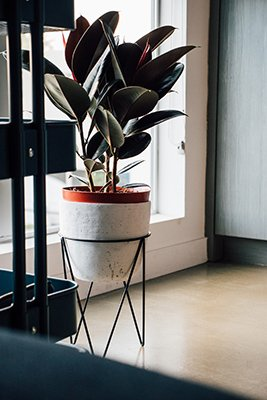 Trendy Plant Guide