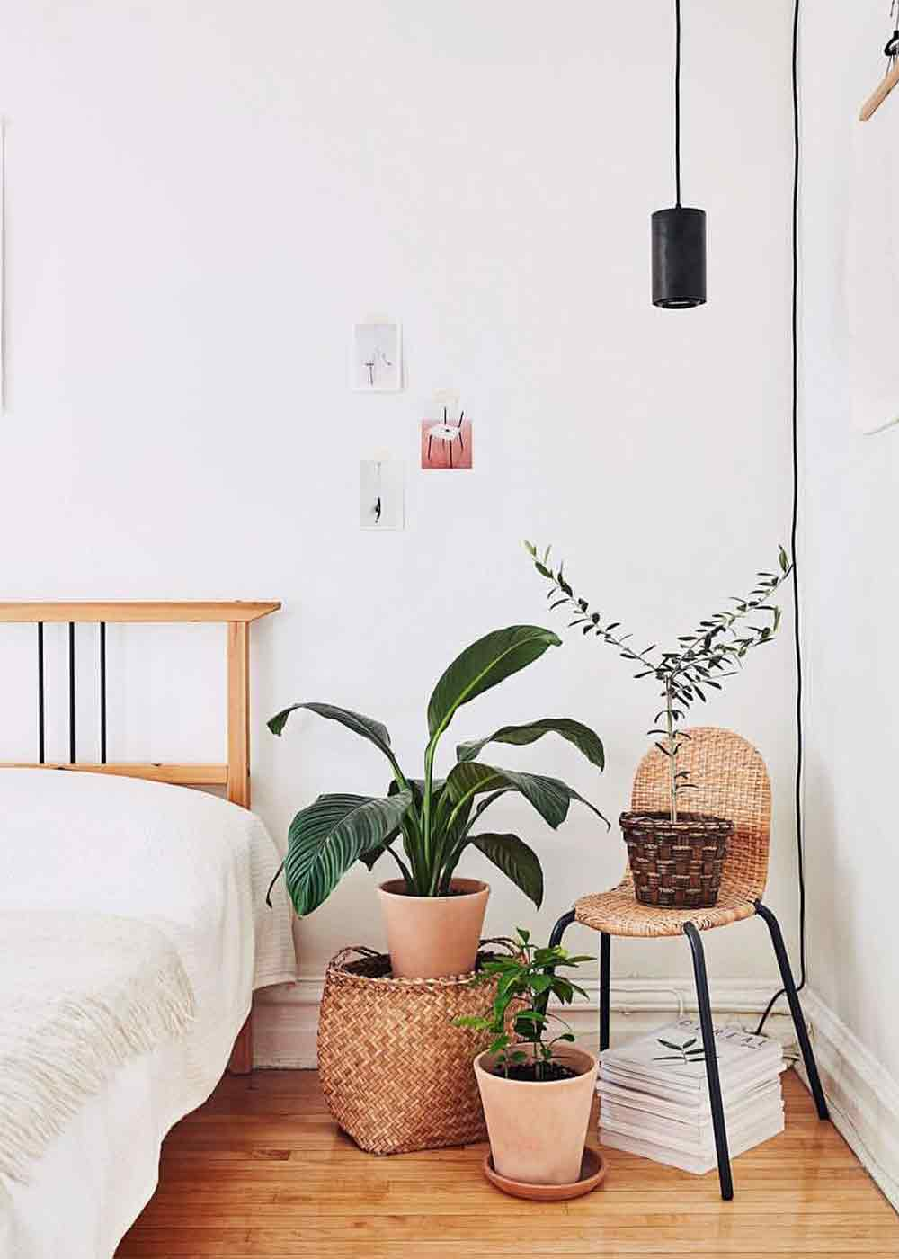 Large Black Aspect™ Hanging Grow light growing an olive tree
