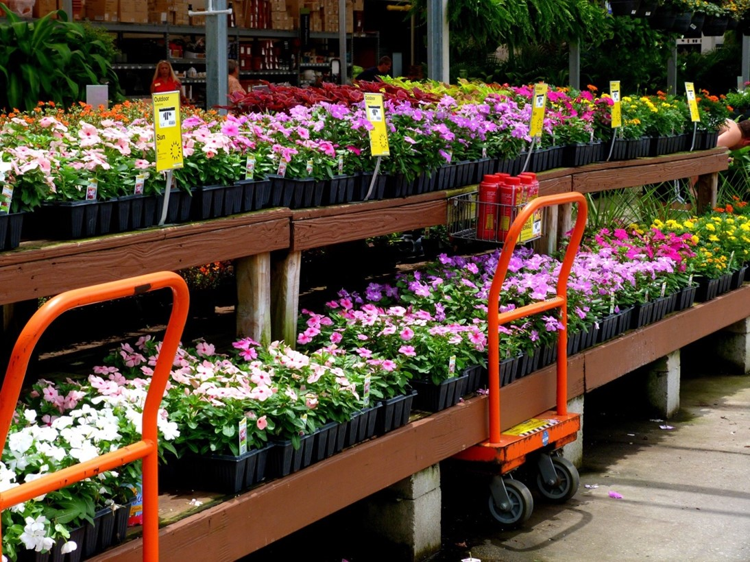 online plant delivery services