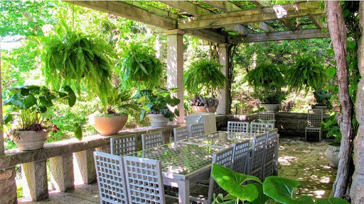 Houseplants that can Live Outdoors In The Summer