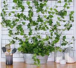 plants for your living wall