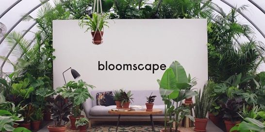 Bloomscape emphasizes quick delivery to ensure the plant stays healthy as longas